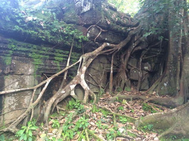 Strangler tree