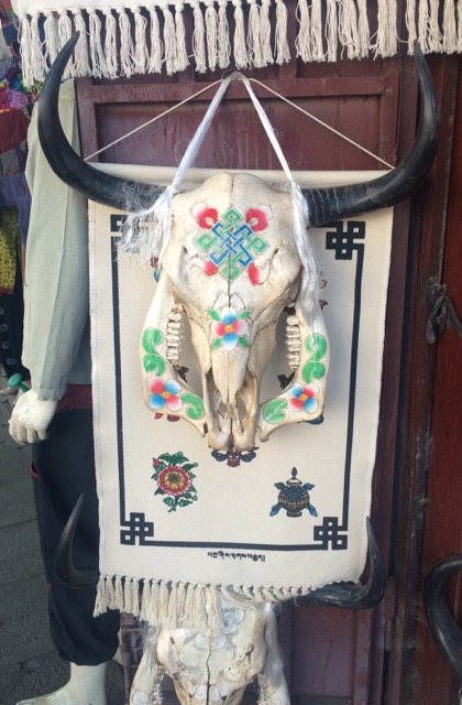 Tibet yak skull
